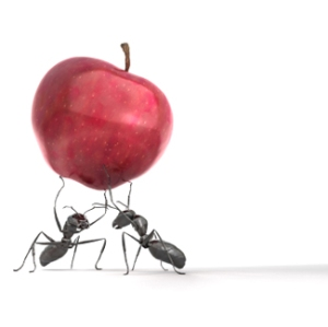 Ants Carrying an Apple